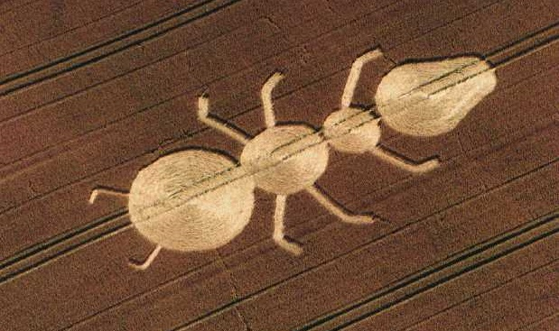 The ant crop circle found in Britain