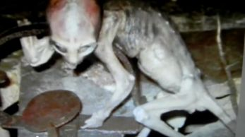 Proof Of Aliens Pictures  10