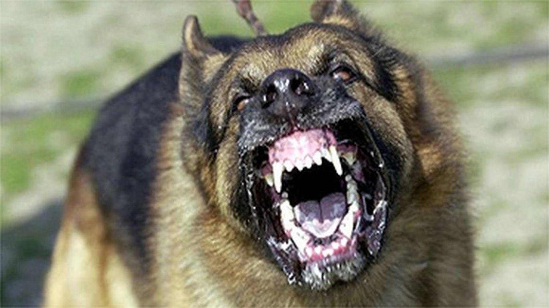 cattle mutilation aggressive dog